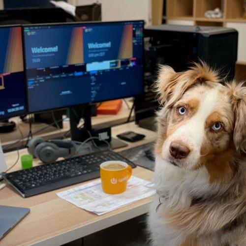 dog breeding websites
